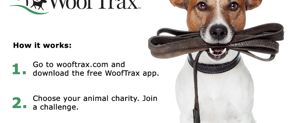 Walk For The Dogs With Wooftrax Lewis Clark Animal Shelter