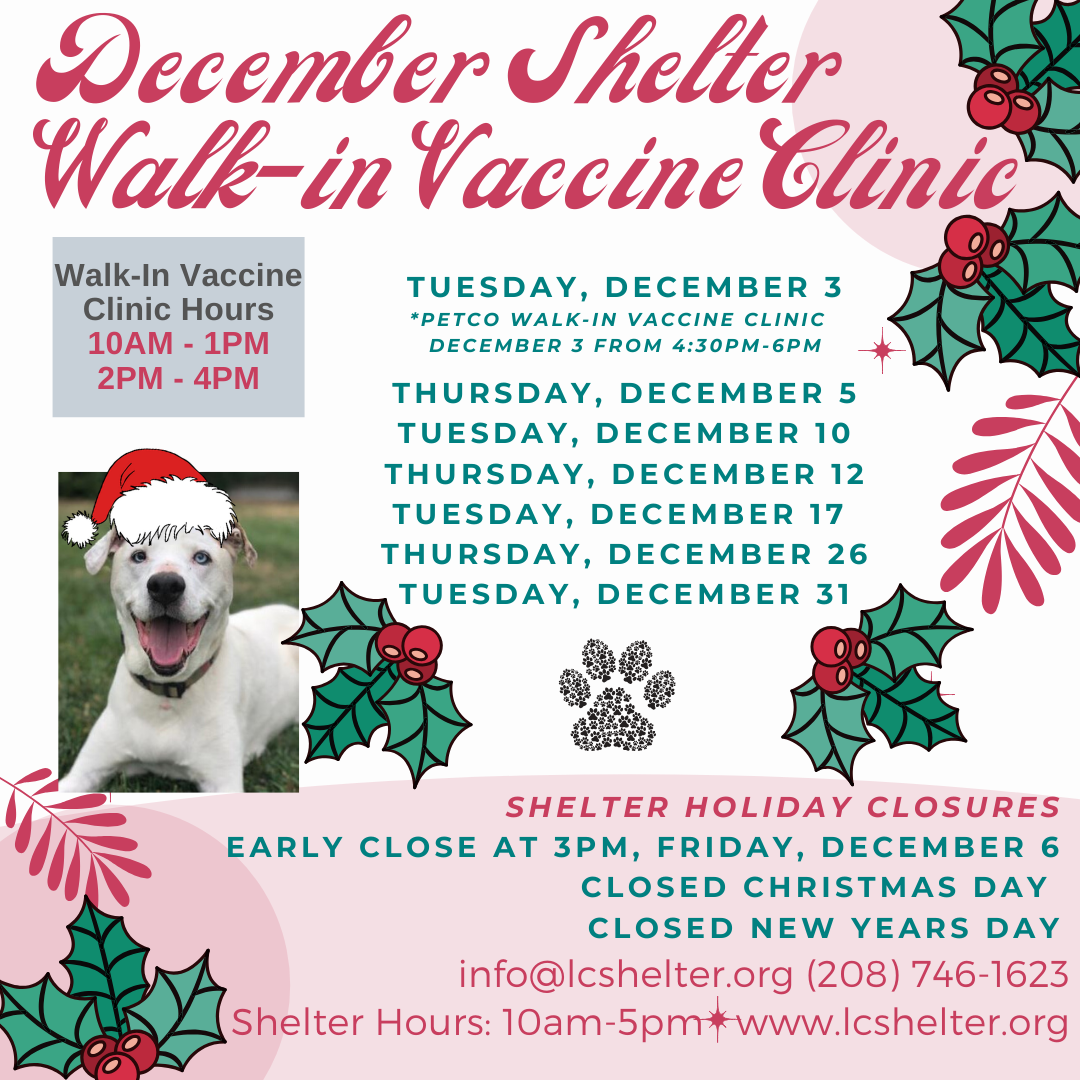 Kennel Cough Vaccine Cost >> Vaccines Lewis Clark Animal Shelter Lewis Clark Animal